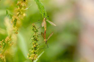 Piège à moustiques - image